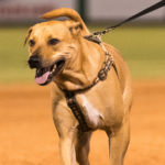 20160709 Clearwater Threshers v. St. Lucie - Bark at the Park - JR - Final-5566