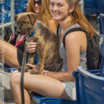 20160709 Clearwater Threshers v. St. Lucie - Bark at the Park - JR - Final-8211